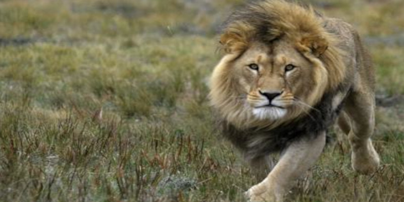 Carlos der Löwe