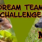 DREAM TEAM CHALLENGE BANNER